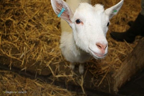 GAEC di Vallecalle - Fromage de chèvre et de brebis