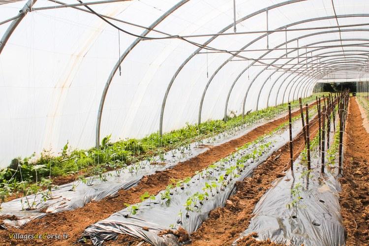 pratali mara cher d 39 agriculture biologique folelli fruits et l gumes bio magasin. Black Bedroom Furniture Sets. Home Design Ideas