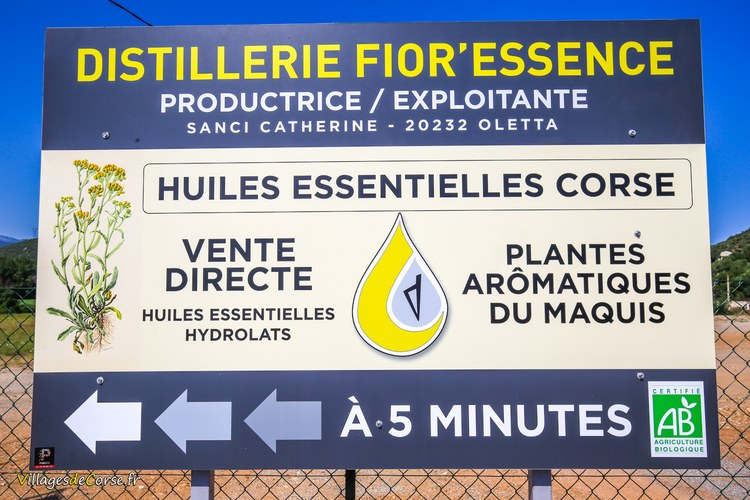 Distillerie fior essence oletta