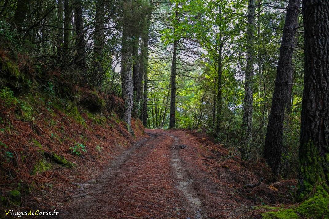 Forêt - Aullène