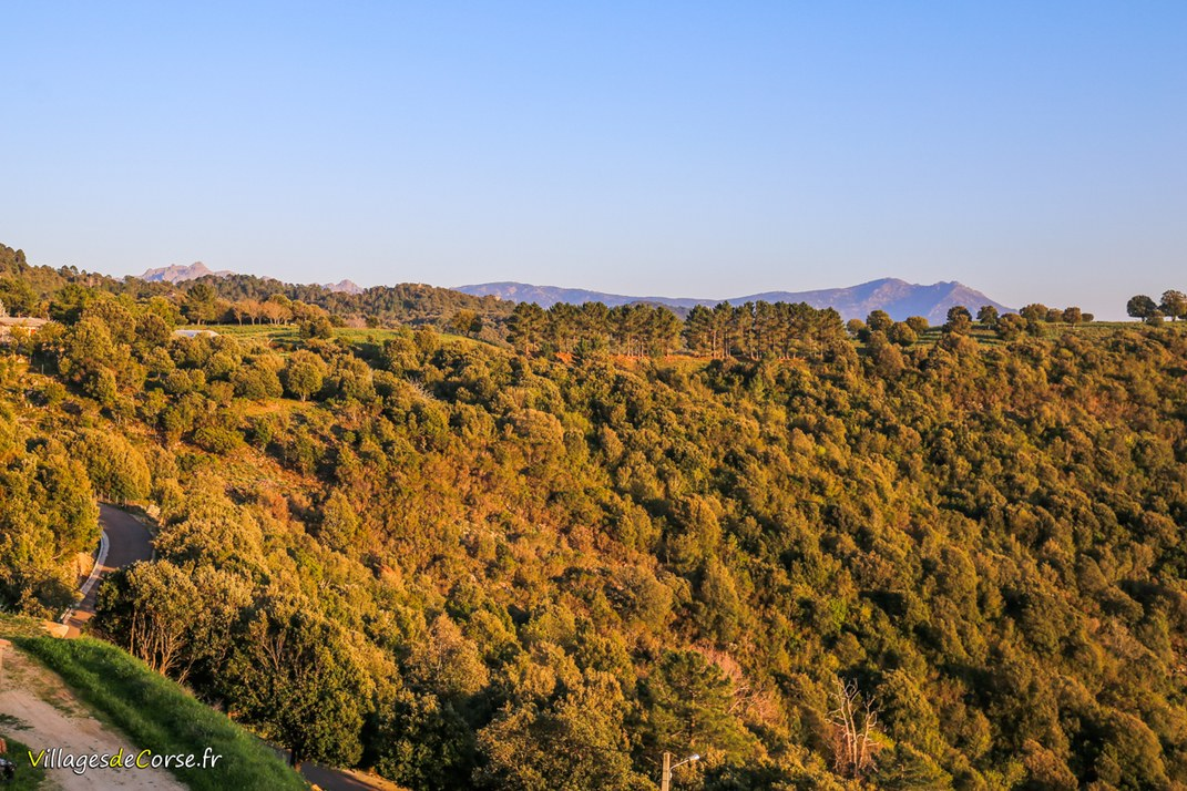 Forêt - Sorbollano