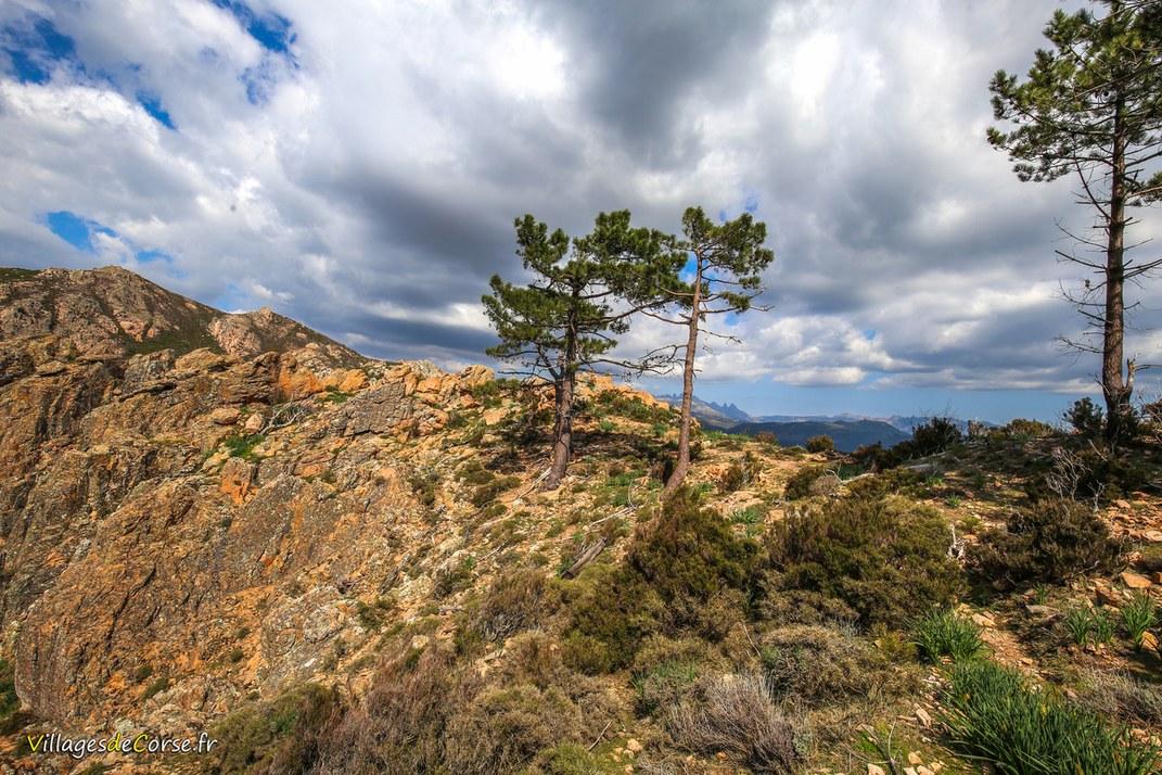 Monte Acciaiu - Zérubia