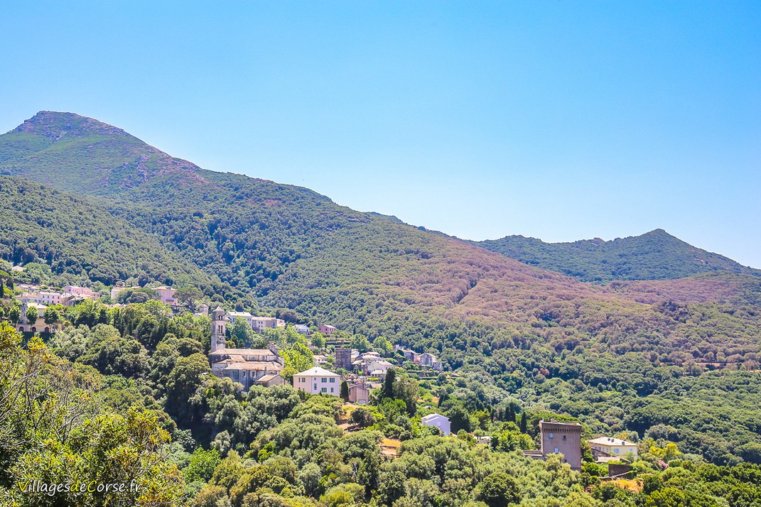 Village - Pino