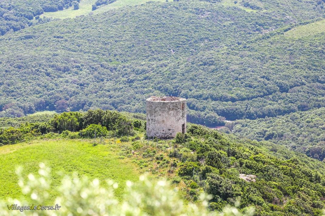 Tour Génoise - Tour ronde de Quercioli - Rogliano