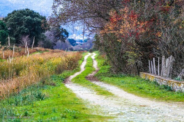 Sentier - Venzolasca