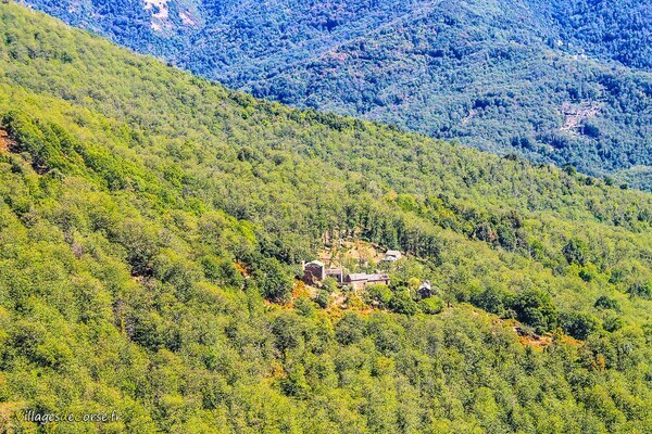 Forêt - Croce