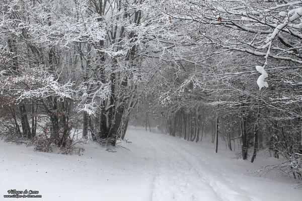 Forêt - Vizzavona - Vivario