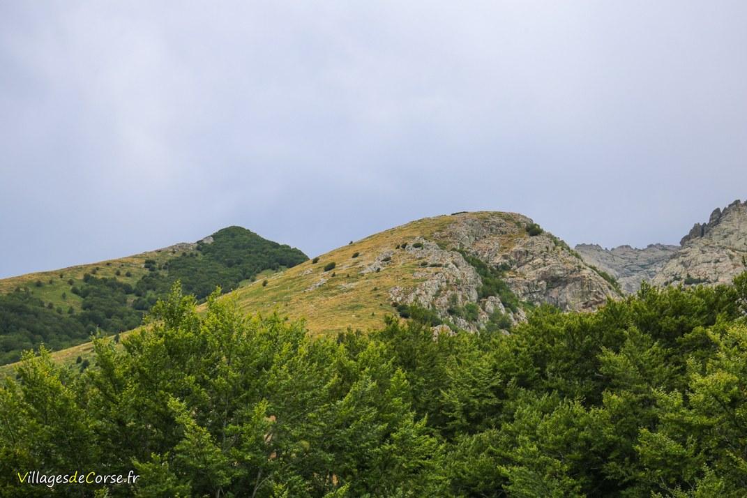 Montagne - Vivario