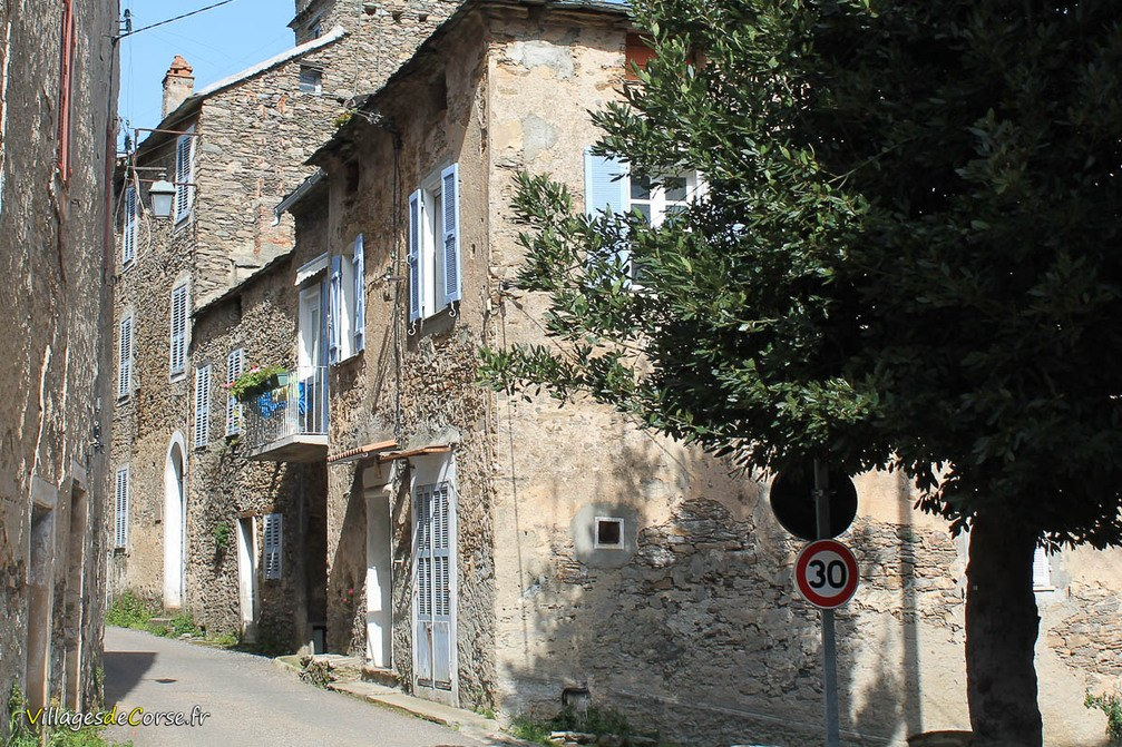 Rue - Talasani