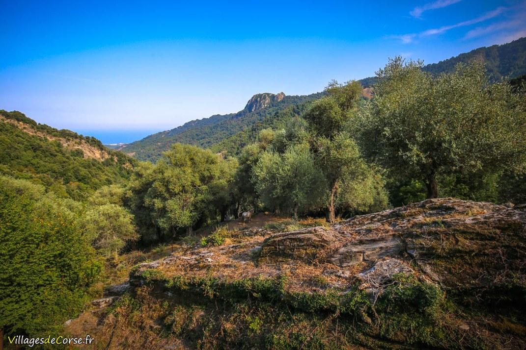 Montagne - Velone Orneto