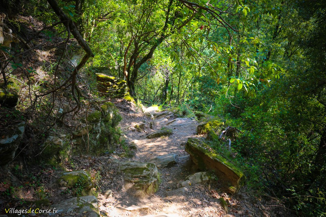 Sentier - Velone Orneto