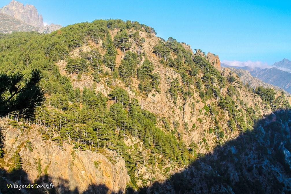 Montagne - Orto
