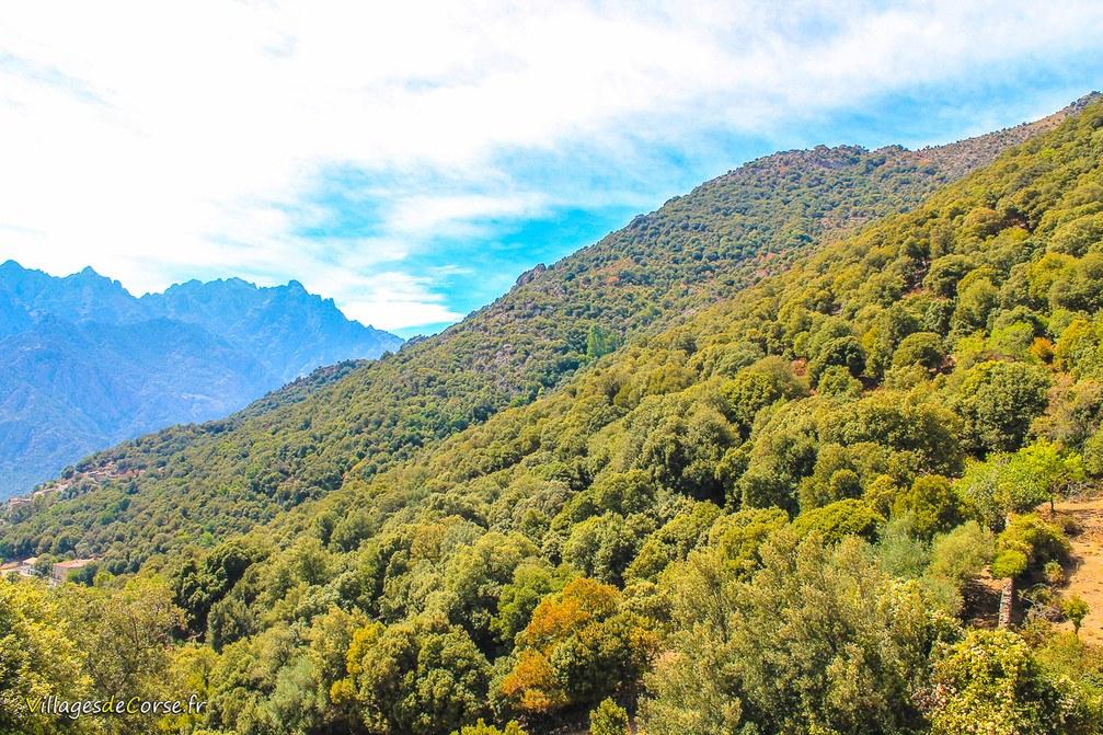 Forêt - Moltifao