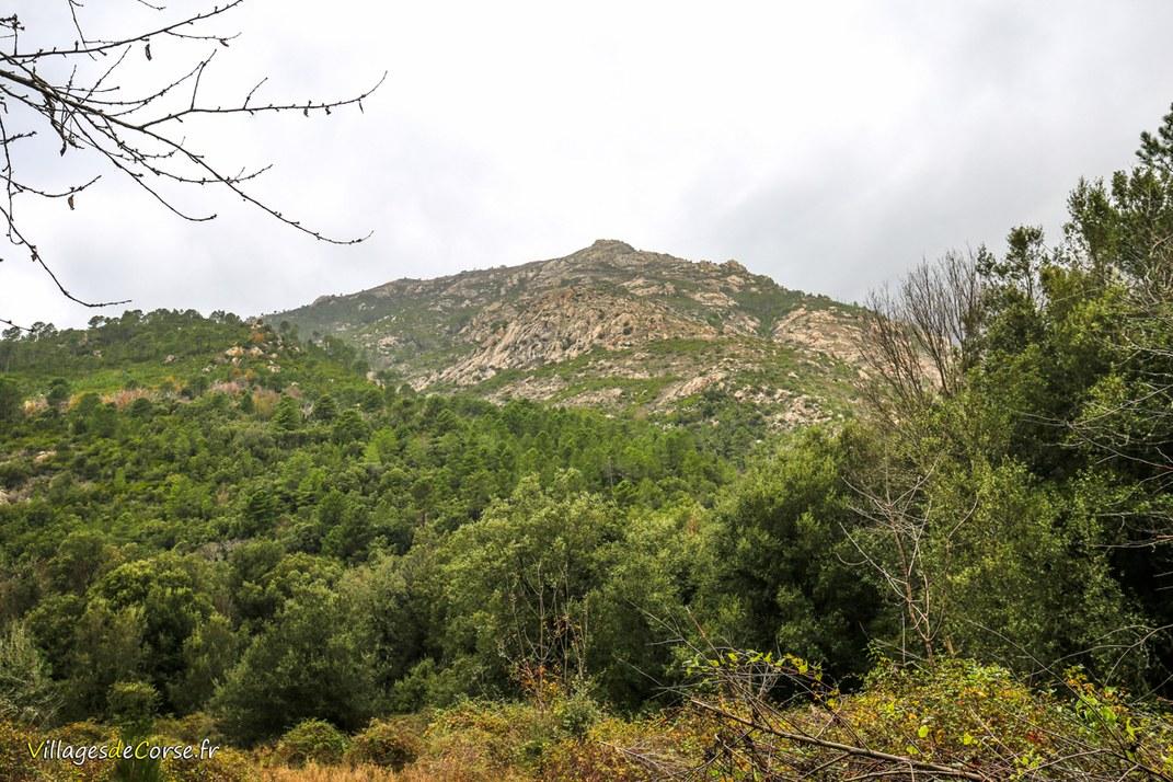 Forêt - Bocognano