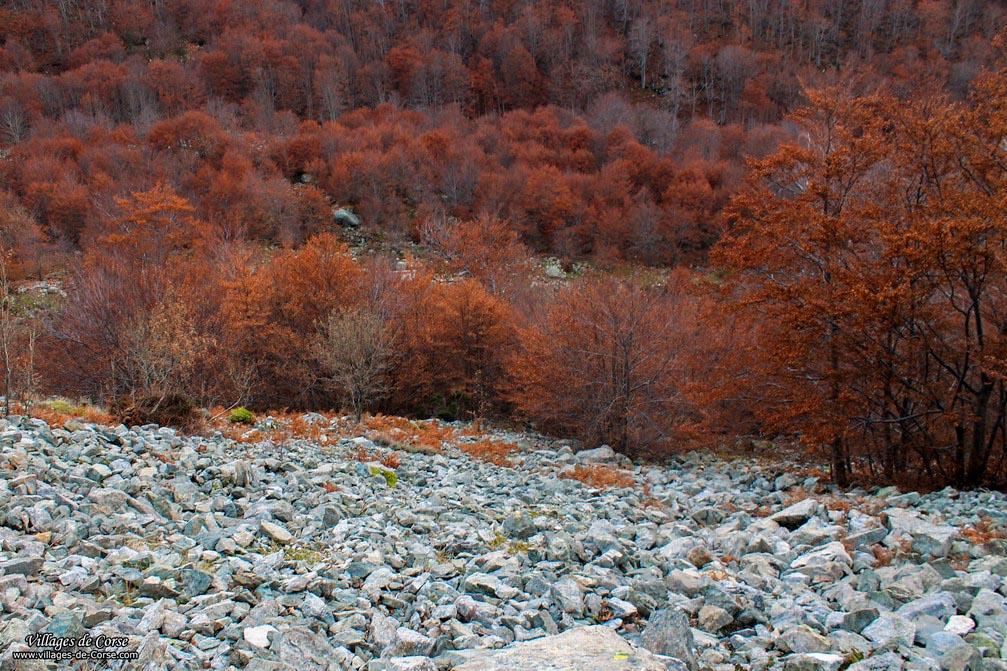 Bergeries - Capiaghja - Bocognano
