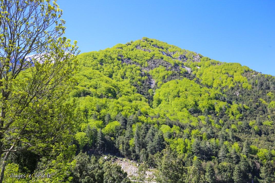 Mont - Punta Capitellu - Bocognano