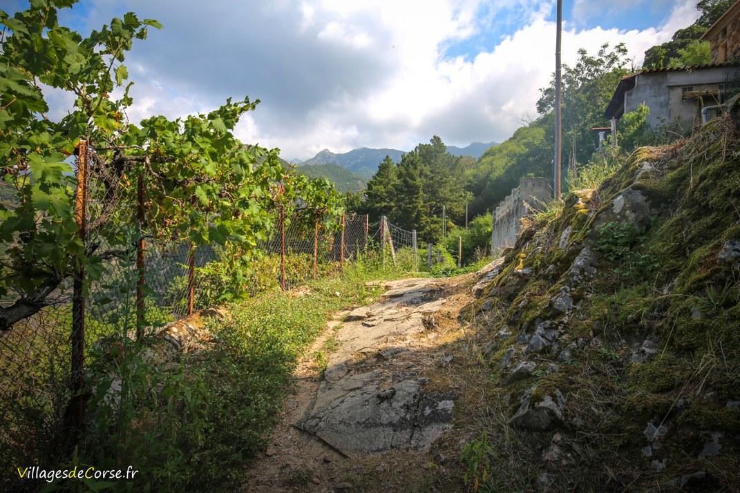 Sentier - Cuttoli Corticchiato