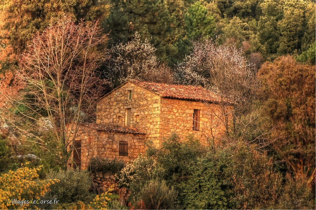 Maison - Peri