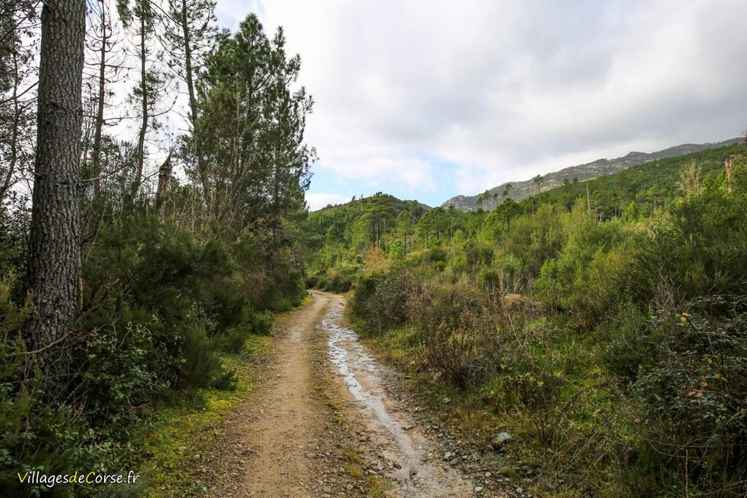 Sentier - Tavera
