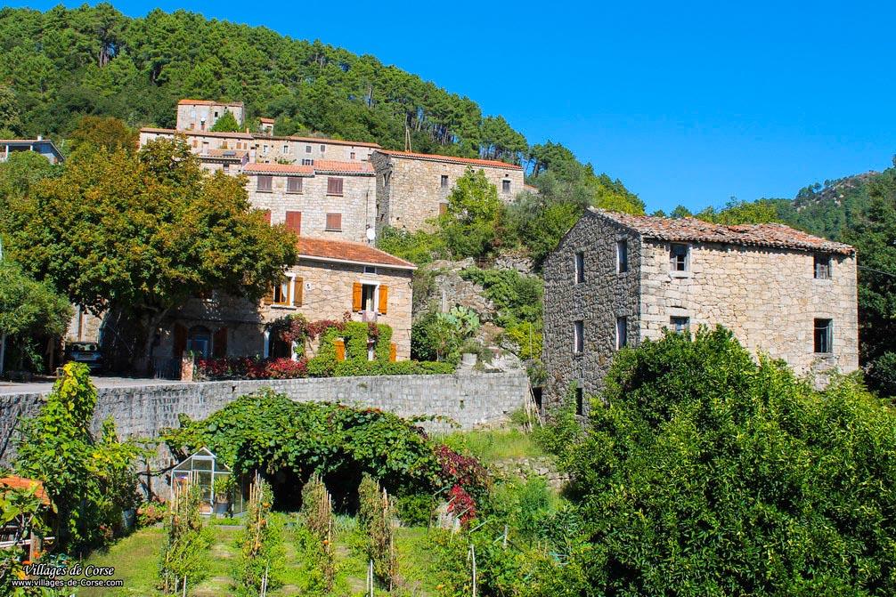 Village - Vero