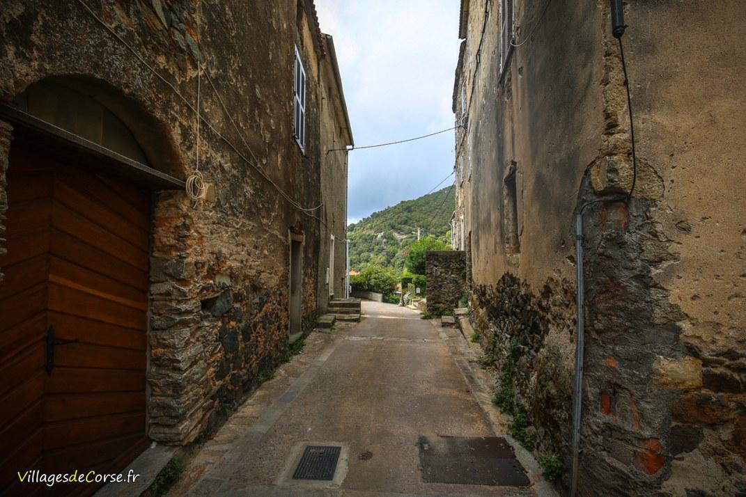 Rue - Tox