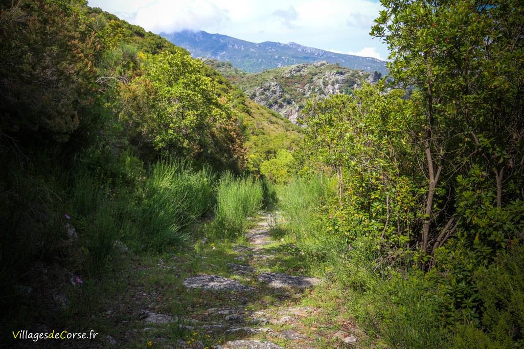 Montagne - Zalana