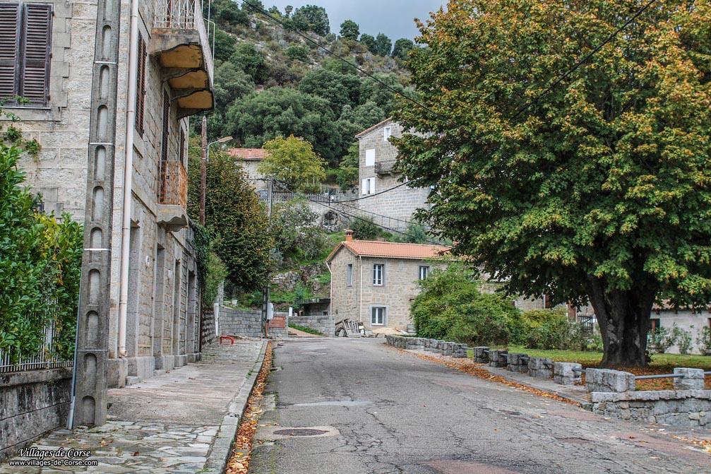 Road - Campo