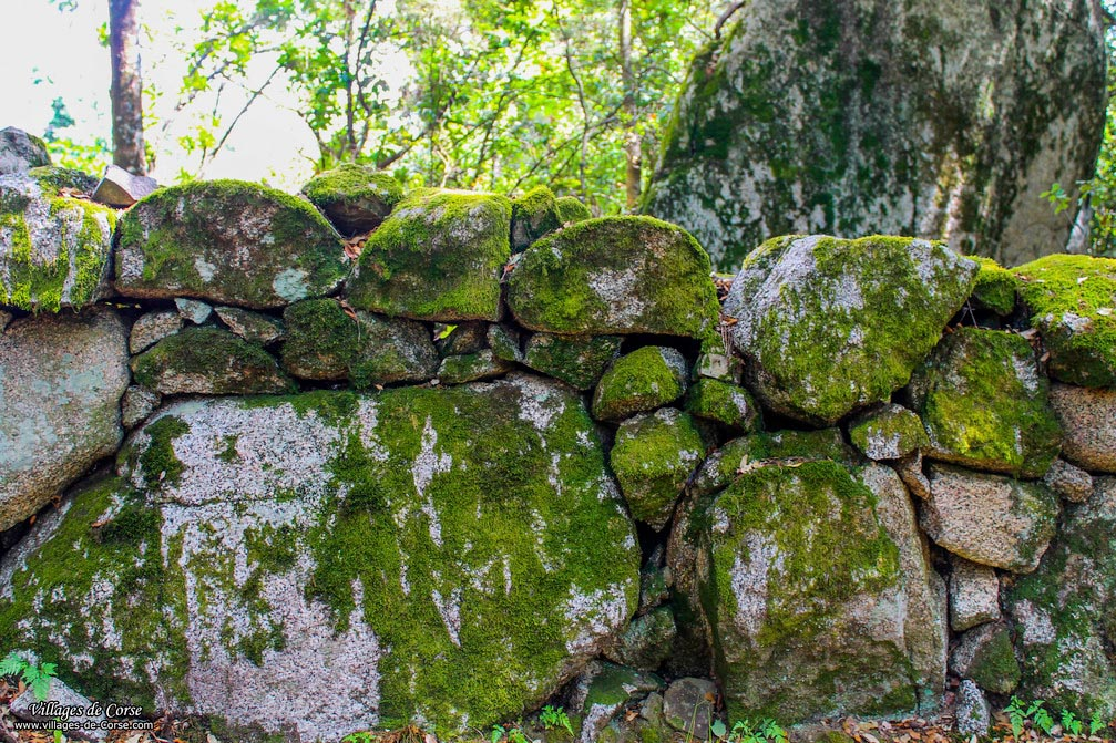 Mur - Cardo Torgia