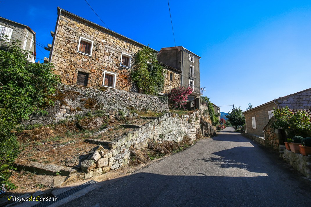 Rue - Olivese