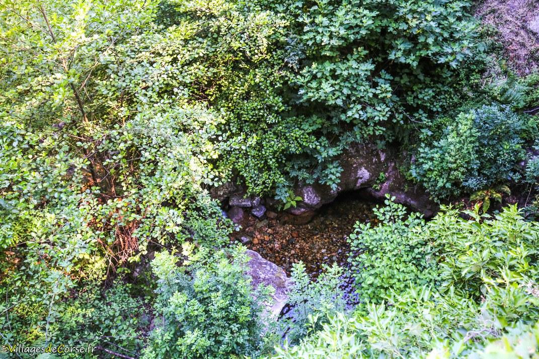 Ruisseau - Piscia in alba - Olivese