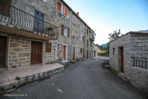 Rue - Palneca