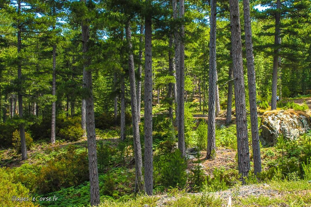 Forêt - Noceta