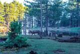 Cochon devant lac de Creno corse