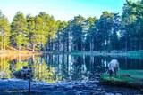 Cochon lac de Creno orto