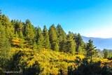 Forêt soccia